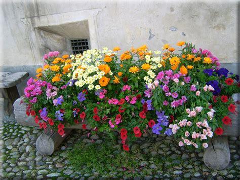 foto fiori per desktop sfondi per desktop i fiori sfondo 024
