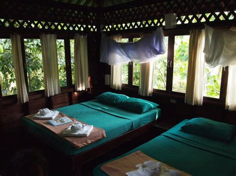 our jungle house romance tree house next to cliff and river khao sok foto van our jungle house khao