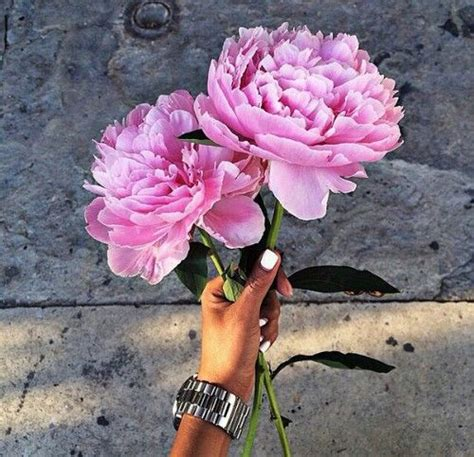 instagram pinkpeonies light pink peonies pictures photos and images for