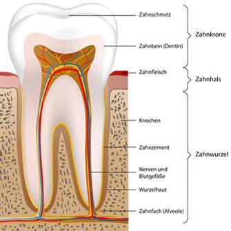 Beschriftung Zahn by Z 228 Hne Im Gebiss Der Mundh 246 Hle Beim Mensch Thurlinde