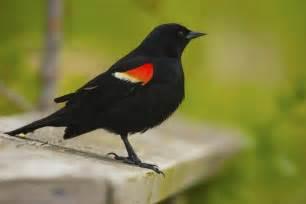 birds chsp interpretive association