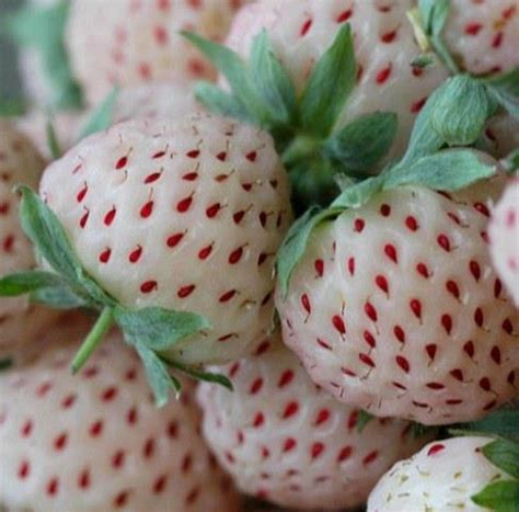 3 fruits with seeds on outside pineberry pineapple strawberry did you