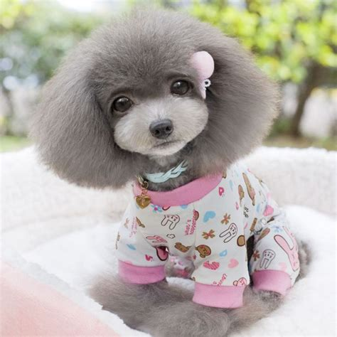 Clothes Sleep Pets Promotion Shop For Promotional Clothes Sleep Pets On Aliexpress