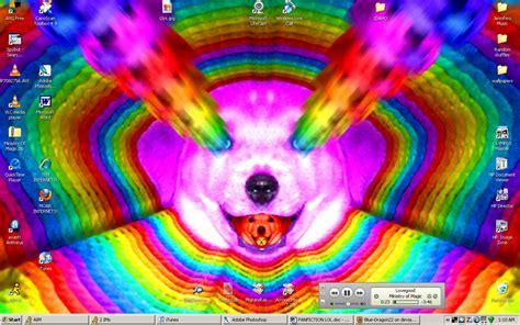 rainbow puppies image gallery rainbow puppies
