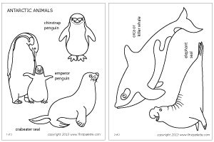 coloring pages of antarctic animals penguin kindergarten cut outs new calendar template site