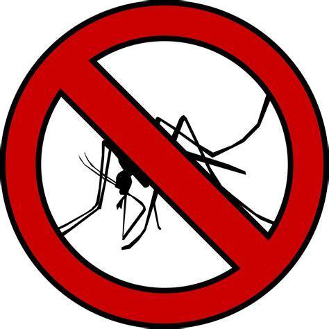 formiche volanti rimedi la migliore rimedi contro formiche casa idee e immagini di