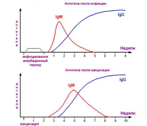 avidity test cmv rubella igg igm information and advice