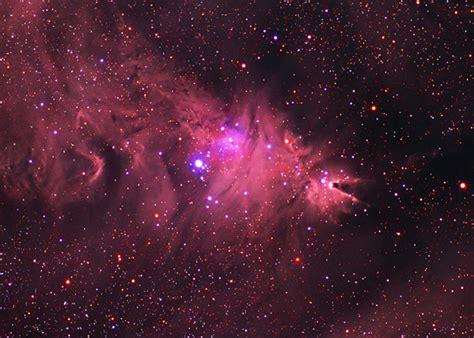 christmas tree nebula ngc 2264 cone nebula and tree cluster
