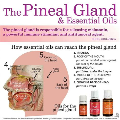 Essential Oils For Detox Brain by How To Detox Your Pineal Gland Flouride Mercury And