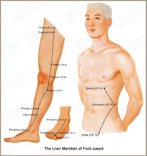 Tcm Liver Detox by Liver Meridian Meridians The O Jays And