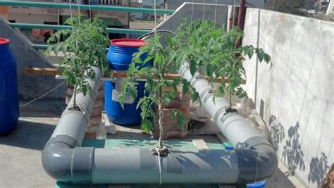 membuat nutrisi hidroponik organik membuat nutrisi organik untuk hidroponik gerbang pertanian