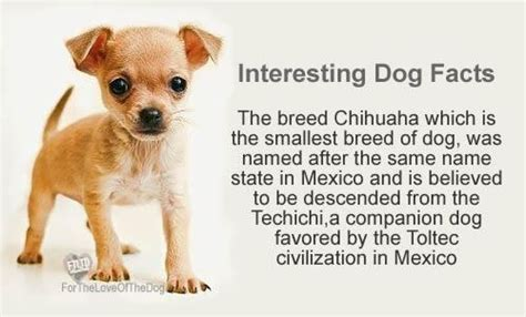 Puppies Born Blind Study More Facts Interesting Facts About Dogs