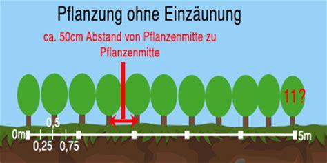 wann thujen setzen wie gro 223 muss der pflanzabstand bei heckenpflanzen sein
