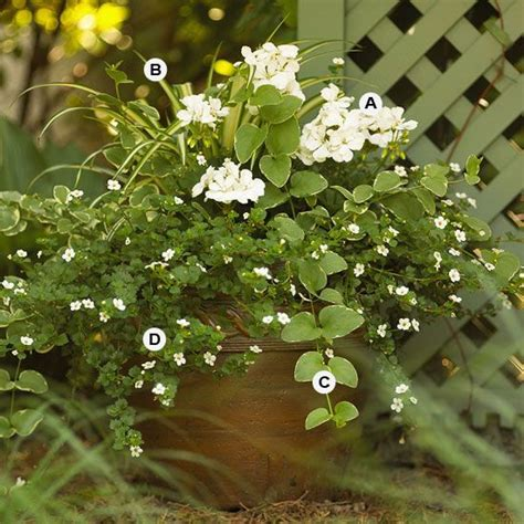 Fantastic Flowers For You All by Container Pairings For Geraniums Gardens Spider