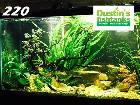 Aquascape Designs Products by Aquascaping Rocks Dustinsfishtanks