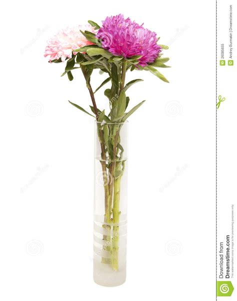 Chrysanthemum Vase by Chrysanthemum In Glass Vase Royalty Free Stock Photo Image 26085655