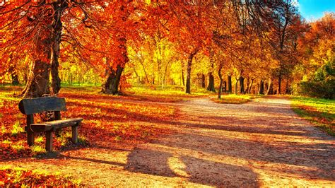 wallpapers collection autumn leaves wallpapers