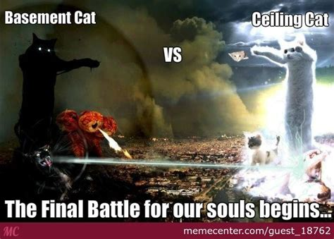 cat years vs years basement cat vs ceiling cat by guest 18762 meme center