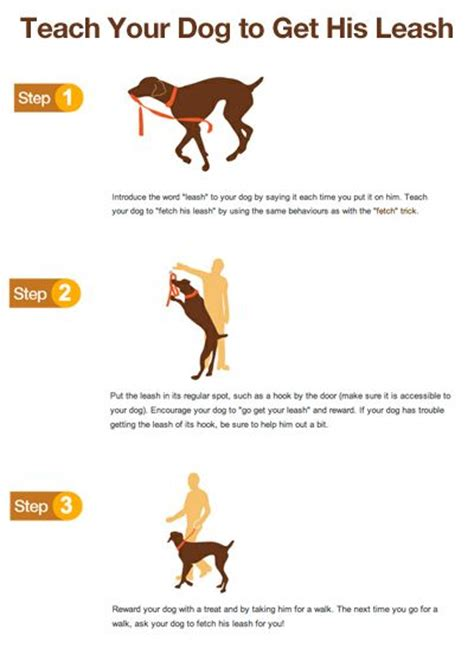 tricks to teach your puppy 25 best ideas about commands on stuff and