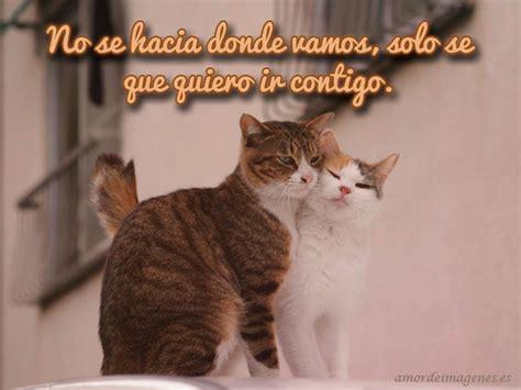 imagenes lindas de amor de gatitos imagenes de gatitos tiernos con frases de amor