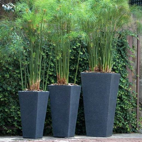 planting pots for sale plant pots for sale delightful designer plant pots mr