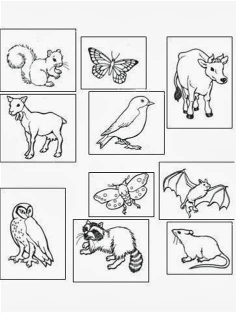 night animals coloring page colors and kindergarten it s october
