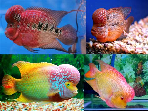 most colorful freshwater fish colourful tropical fish species