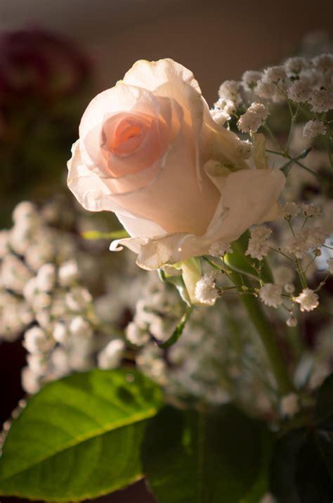 fiori sposa giugno fiori matrimonio giugno per risparmiare ho fatto cos 236