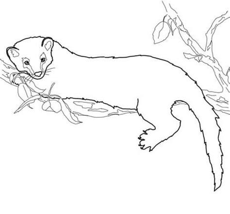 coloring pages categories fisher coloring page free printable coloring pages