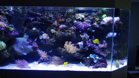 aquarium design youtube de la fabrication 224 la livraison aqua art design