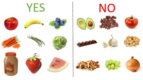 is fruit bad for dogs feeding dogs fruit bad for diets creationinter