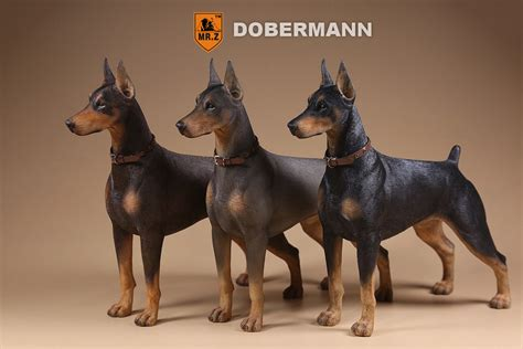 dobermann dogs