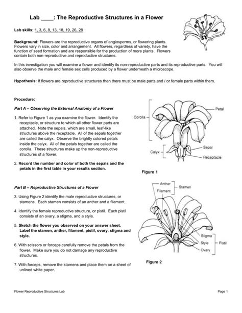 Plants Reproduction Worksheet by Plant Reproduction Worksheet Answers The Best And Most