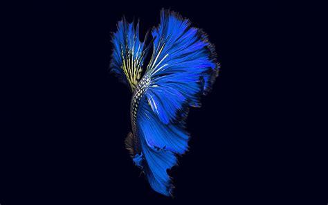 apple ios fish  background dark blue papersco