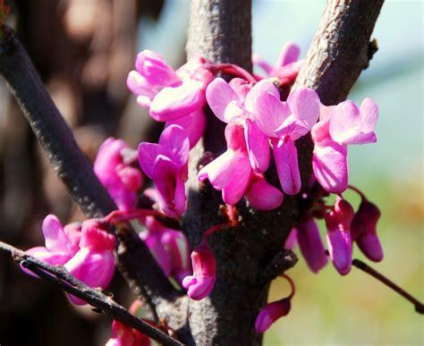 fiore a forma di cuore il mondo in un giardino l albero dalle foglie a cuore e