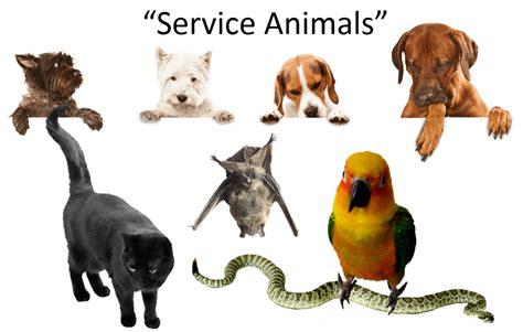 service dog housing laws judycook biz mentoring property managers