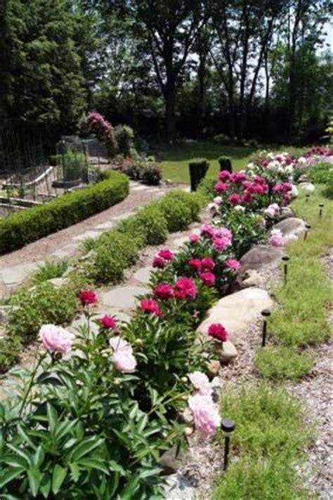 Peony Garden Cranberry Design Ideas 30 Best Ideas About пионы Peony Peonies Peony In Garden Bed Peonies In Garden Design On