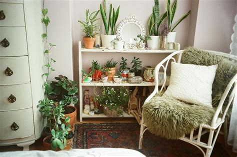 Plants For The Bedroom by Decor Plants Lady Flashback