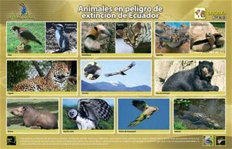 libros sobre animales en peligro de extincion pdf especies en peligro de extincion ecuador vida animal