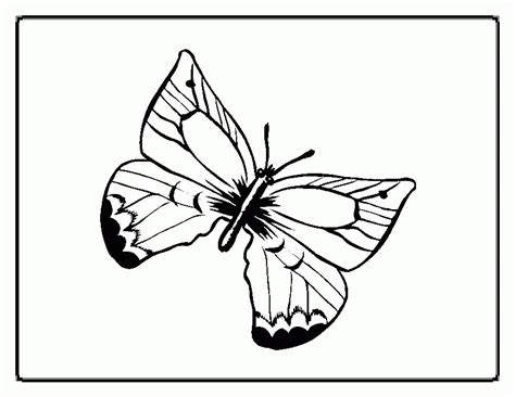 african butterfly coloring pages printable coloring