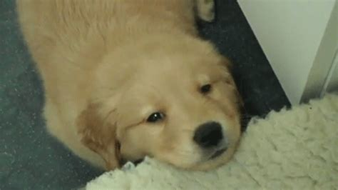puppies gif the 23 most adorable puppies of 2013