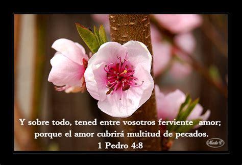 imagenes de rosas con versos versiculos biblicos flores