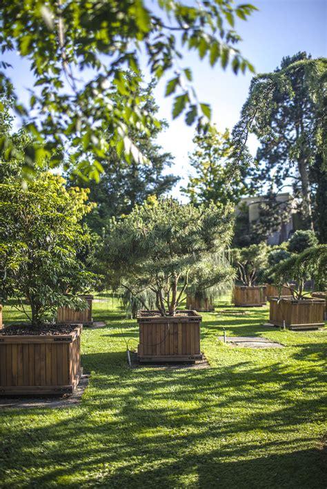Garten Pflanzen Daepp daepp gartenpflanzen search ch