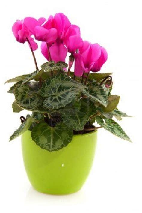 piante in piante eflora shop
