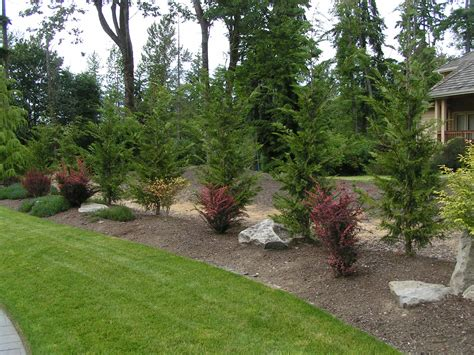 Tree Garden Ideas Leyland Cypress Landscape Ideas Leyland Cypress Placed As A Border Backyard Ideas