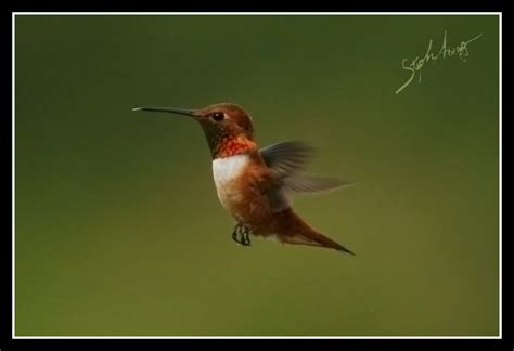 hummingpeckers steph abegg s climbing photography old