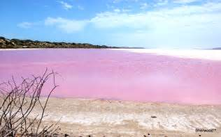 pink lake the pink lake western australia of everyday life and
