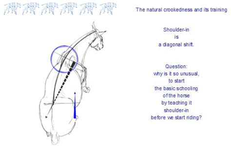 movement pattern analysis exles straightening the crooked horse