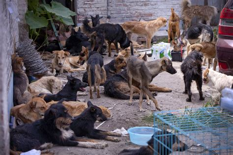 china another chemical kills 7 exposed to poison gas at paper mill city kills thousands of dogs after 5 human deaths