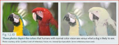 can dogs see colors can dogs see color and how do we dr yin